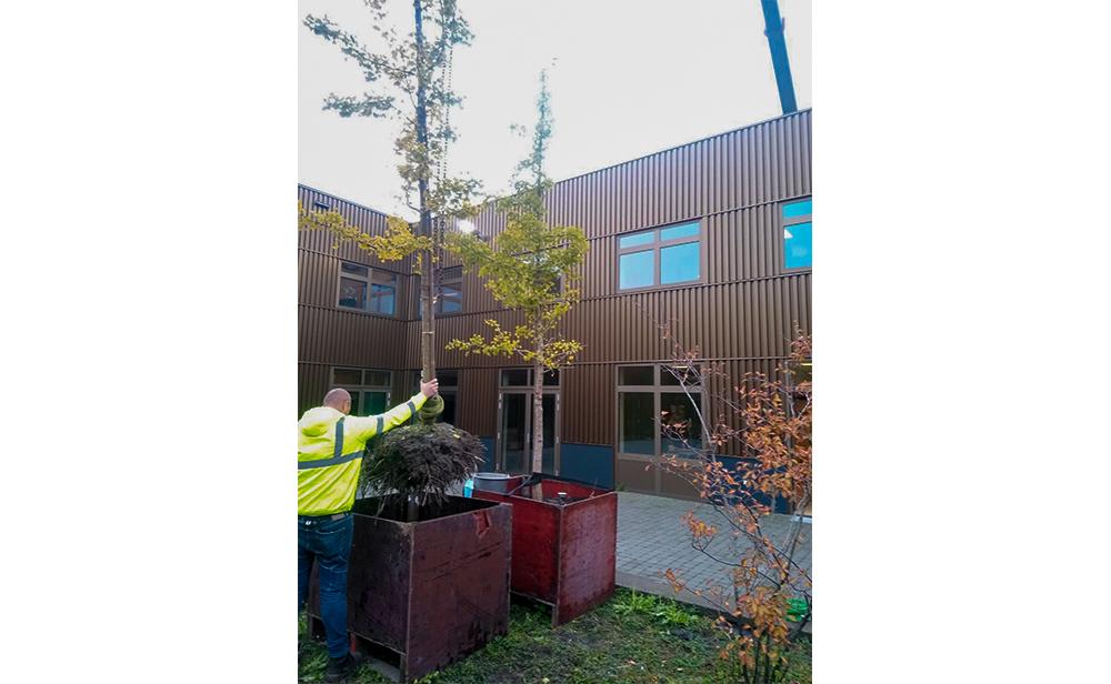 Bomen verplaatsen Heliomare in Heemskerk